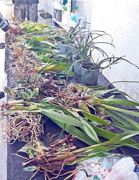 Se intensifican controles y decomiso de flora en Cuenca