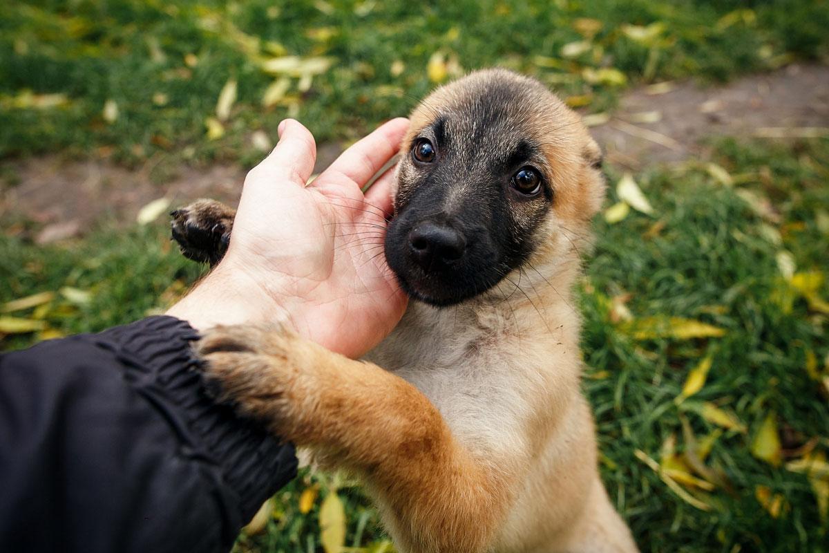 Tecnología amigable con los animales