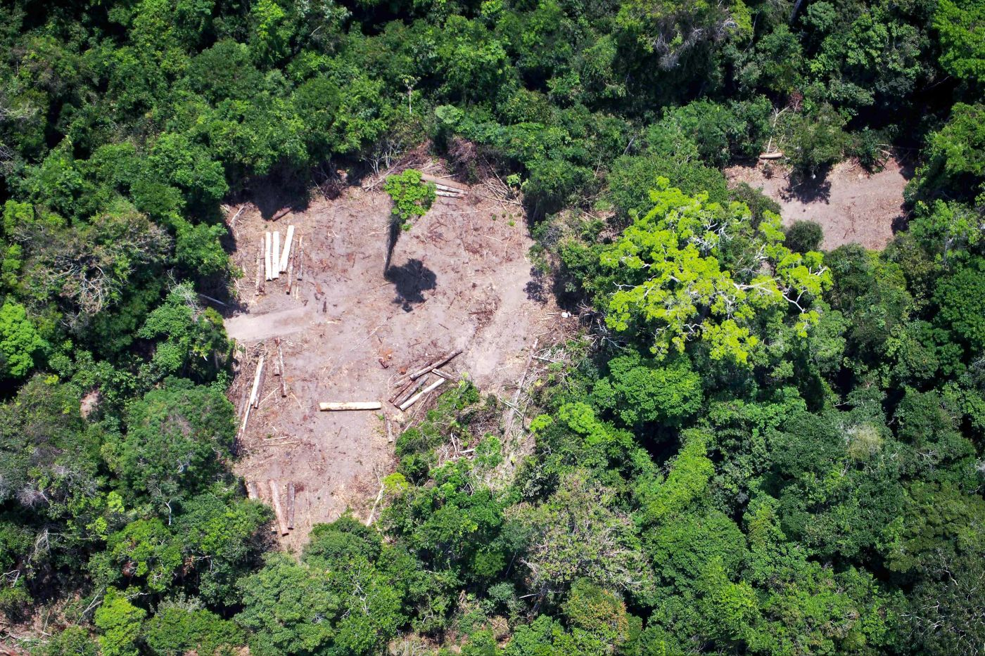 """No frenar la deforestación en Amazonia sería """"un suicidio"""", alerta experto en la ONU"""
