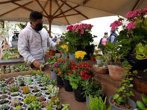 Cuenca revive parte de su historia y paisaje con la apertura de su tradicional Plaza de las Flores